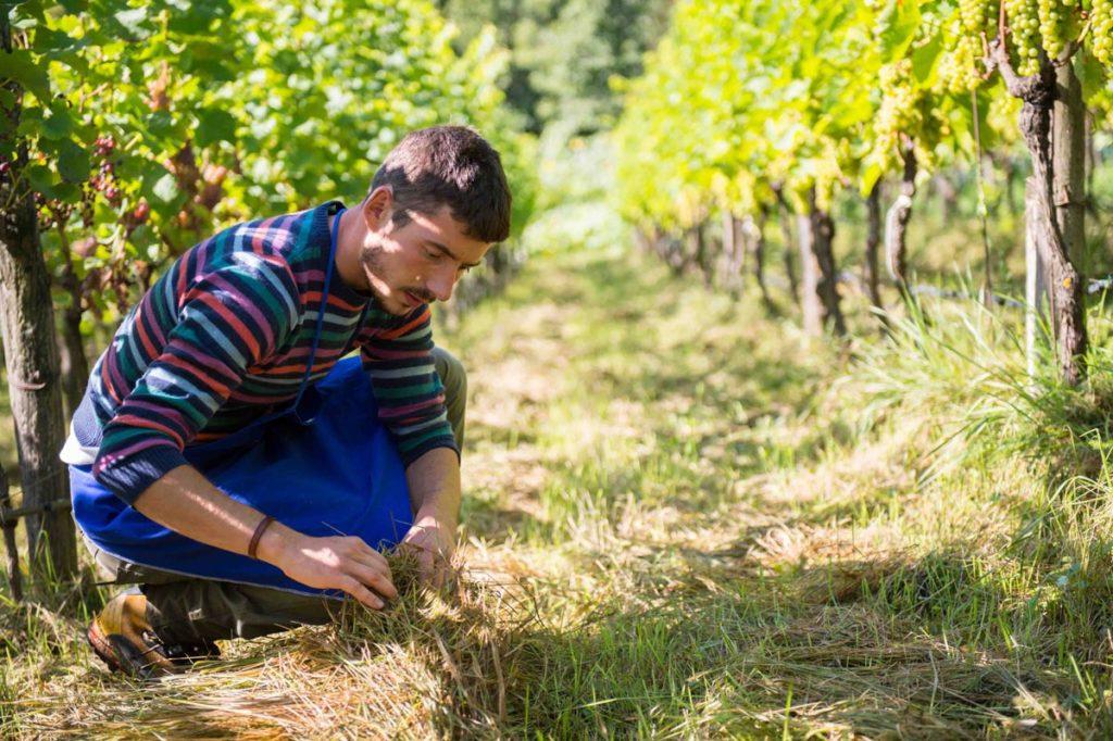 vino vitigni piwi thomas niedermayr
