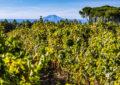 vini isole vinitaly 2019